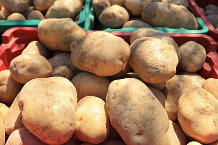 baskets full of raw potatoes  photo