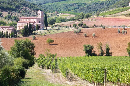 monastery nature: tuscany vineyard landscape with Sant Antimo abbey in background, Italy