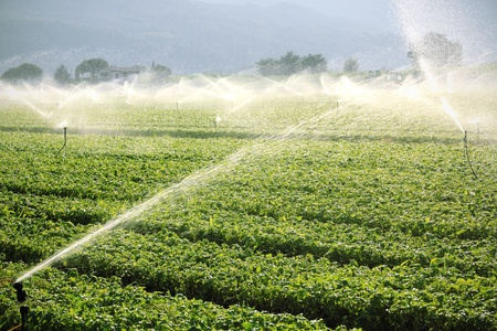 sprinklers: Irrigation system on green field