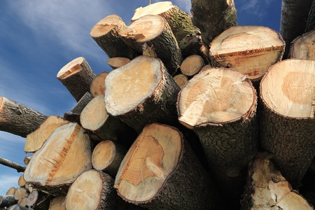 forestry industry: pile of cut wooden logs over scenic sky