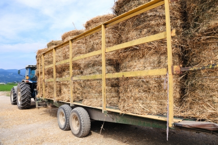 hay field: Tractor with trailer and bales of hay