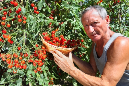 Farmer showing red cherry tomatoes photo