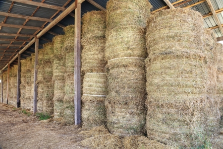 Haystacks in barn at the agricultural farm photo