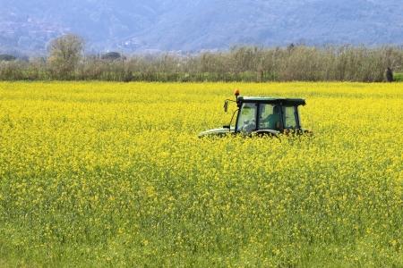 trekker in het voorjaar van boerderij-werk binnen canolagebied Stockfoto