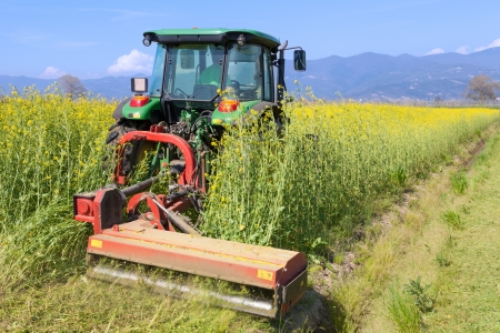 canola: row crop tractor inside yellow canola field Stock Photo