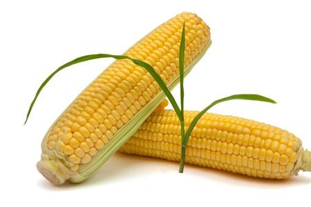 corn ear: ma�z grupo o�do en el fondo blanco con el brote