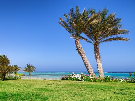 marsa: Palm beach in Marsa Alam, tropical paradise  Egypt