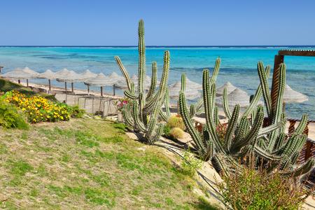 marsa: beach and sea in Marsa Alam, Red Sea, Egypt