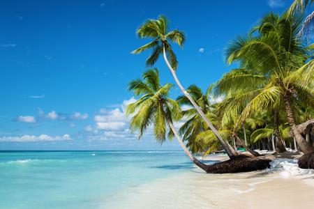 Caribbean beach in Saona island, Dominican Republic Standard-Bild