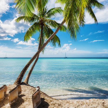 Palm beach in Saona island, Dominican Republic Imagens