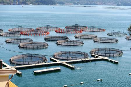 commercial fisheries: aquaculture fish farming in La Spezia, Italy