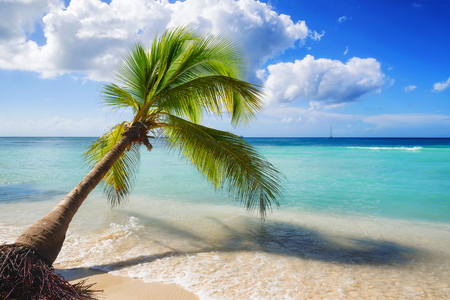 palm: caribbean beach landscape