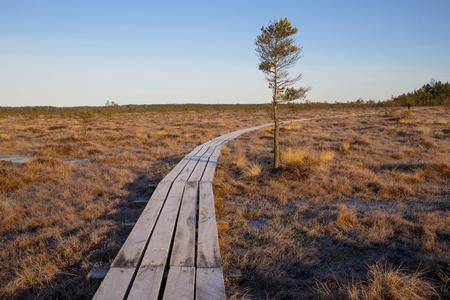 Wooden footbridge in swamp, early spring, Latvia, Dunika