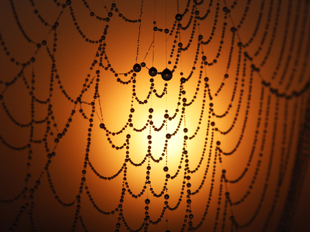 Spider net with water drops, sunrise background
