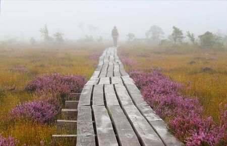 woman walking away on a wooden path in swamp,early morning,mist