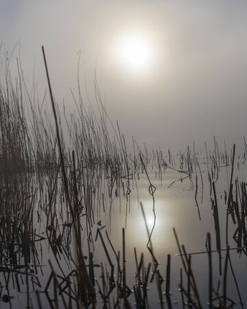 Foggy morning, reed and sun at lake Foto de archivo - 144724063