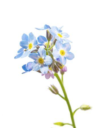 spring blue flowers,