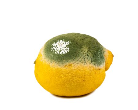 Rotten old lemon isolated on white background