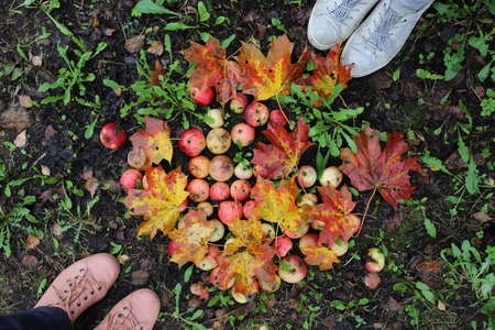 people around apples and tree leaves, autumn, view from the top