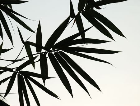 An image of bamboo leaves silhouettes 版權商用圖片 - 2744852