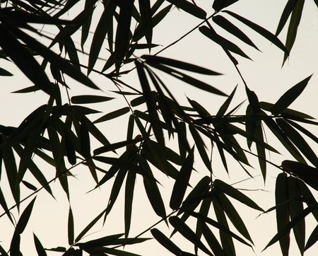 shadow: An image of bamboo leaves silhouettes