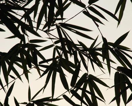 Een afbeelding van bamboe bladeren silhouetten