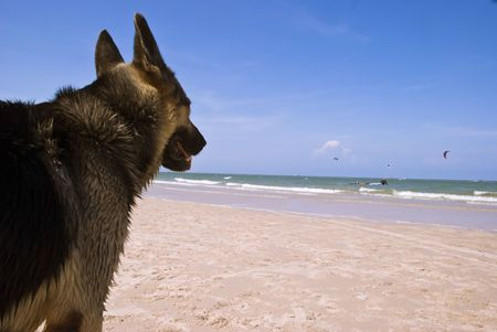 A dog watching his master play kite surfing Stock Photo