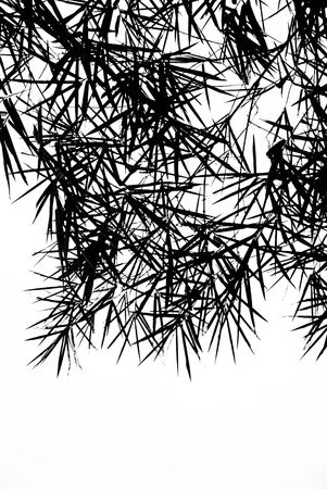 A photographic illustration of black bamboo leaves on a white background Фото со стока