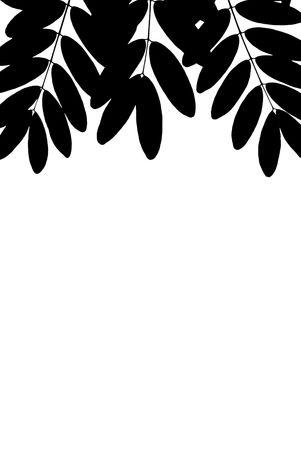 elliptic: A photographic illustration of black elliptic leaves on a white background
