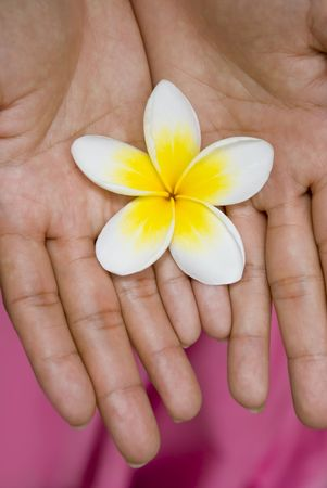 motherly: A white and yellow flower in the hands of a woman