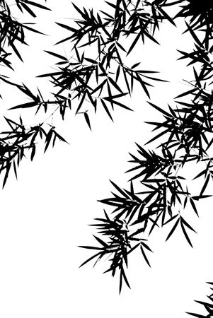 A photographic illustration of black bamboo leaves on a white background Stok Fotoğraf