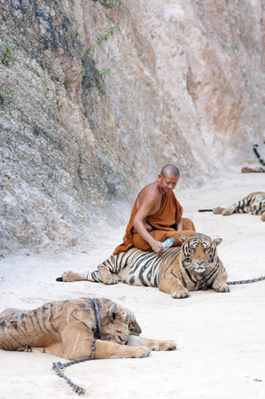 Kanchanaburi, Thailand - February 12, 2012: A Thai Buddhist monk sits on a chained adult male tiger at Wat Pha Luang Ta Bua Yanasampanno - also known as the Tiger Temple - in Kanchanburi, Thailand on Febuary 12, 2012. Editorial