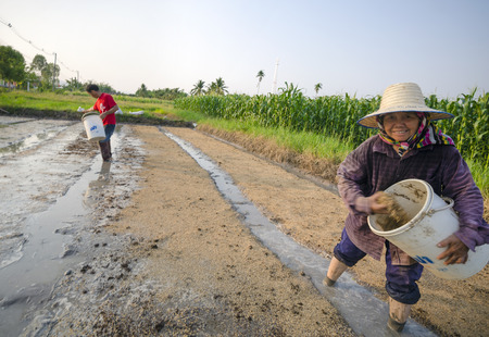 sows: Chiang Mai, Thailand - May 9, 2015: A Thai woman sows rice with her male colleague at a farm in a rural area in the province of Chiang Mai, Thailand on May 9, 2015.