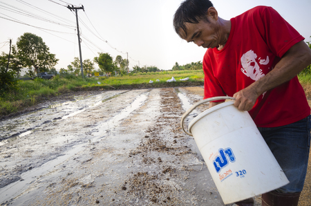 sows: Chiang Mai, Thailand - May 9, 2015: A Thai farmer sows rice at a farm in a rural area in the province of Chiang Mai, Thailand on May 9, 2015. Editorial