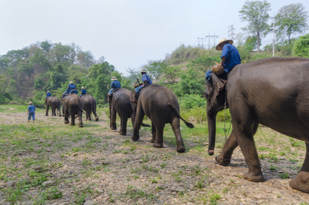 Chiang Mai, Thailand - April 23, 2014: A mahout rides an elephant into the jungle outside Chiang Mai, Thailand on January April 23, 2014. Редакционное