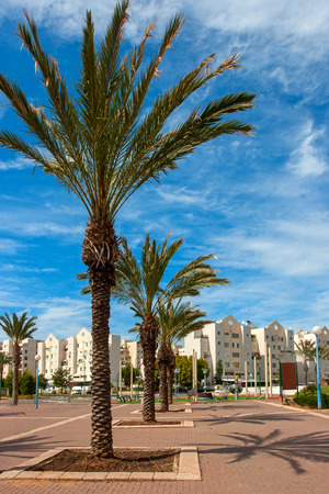 locality: Ashkelon on summer street with palm trees