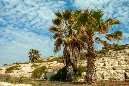 locality: Ashkelon summery coastline with palm trees