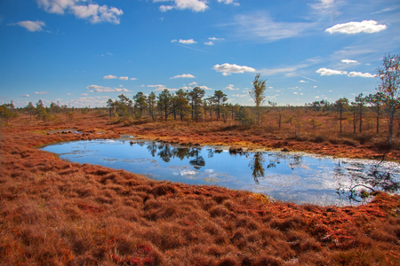 Kemeri National Park peat bog, autumn colors
