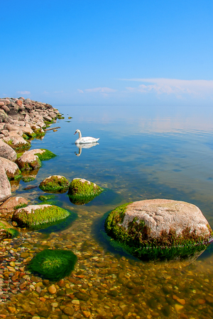 The Baltic Sea coast with swans Mersrags Stock Photo