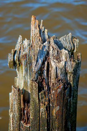 sapless: Putrid tree Stock Photo