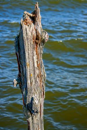 Putrid tree Stock Photo