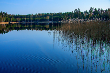 dispassionate: Forest reflection in the lake Stock Photo