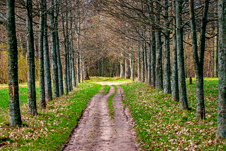 Road in forest Imagens