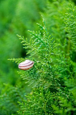 suny: Little snail on plant