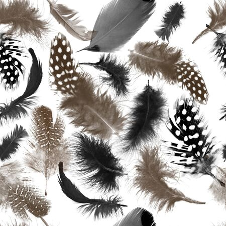 Feathers pattern.Seamless repeating animal texture. Natural background. - illustration Zdjęcie Seryjne