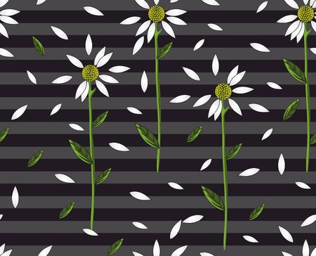 Seamless daisy pattern on gray stripes and black background. White flowers for print fabric. - vector 向量圖像