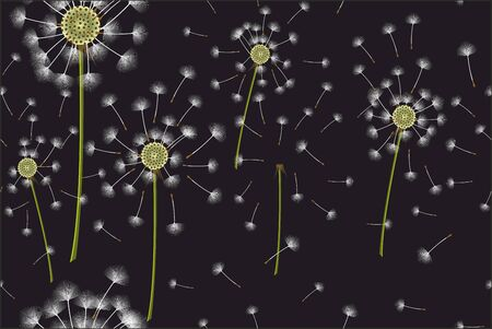 Seamless dandelion pattern on black background. - Vector