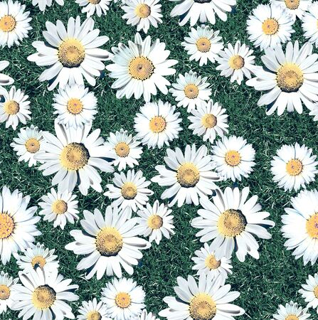 image descriptionDaisy Blossom Seamless Pattern with Grass. Meadow. Natural background. - Illustration