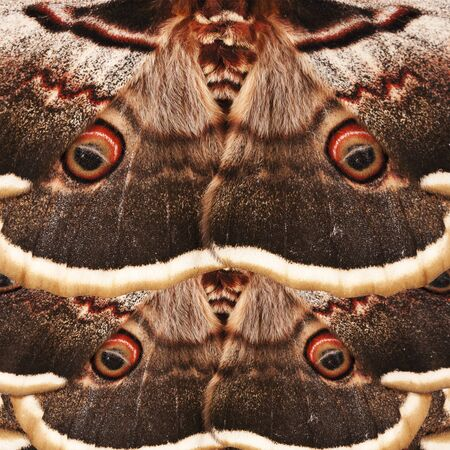 Brown butterfly wings pattern. Natural animal background. - illustration Stock fotó