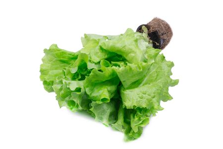 bunch of fresh, green lettuce, object is isolated, photo on a white background Фото со стока